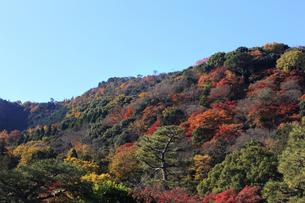 嵐山の紅葉 FYI00474572