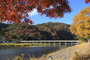 紅葉と渡月橋 FYI00474574