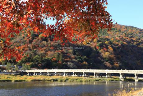 紅葉と渡月橋 FYI00474879