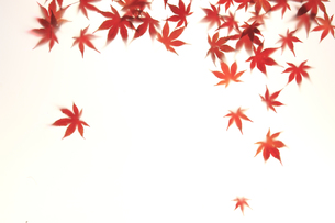 紅葉 FYI00474920