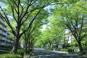 ケヤキ通り FYI00475171