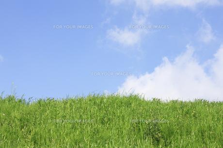 草原と青空 FYI00475190