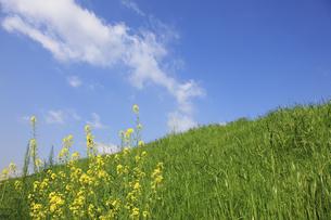 草原と青空 FYI00475203