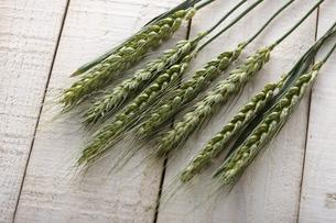 小麦 FYI00475205