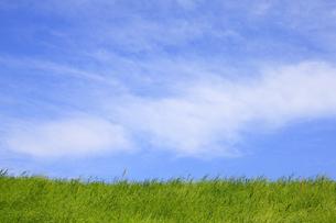 草原と青空 FYI00475221