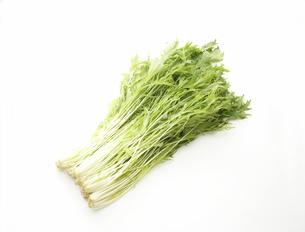 水菜 FYI00476044