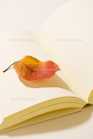 白い本と紅葉した桜の葉 FYI00476114