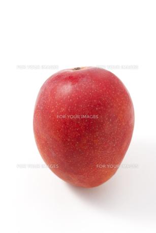 白バックのマンゴー FYI00476386