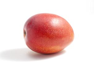 白バックのマンゴー FYI00476408