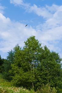 大樹と飛ぶ鳥 FYI00481022