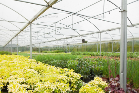 Nursery greenhouse FYI00486752