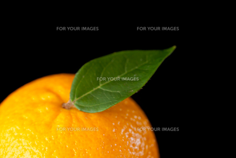 Orange FYI00487022