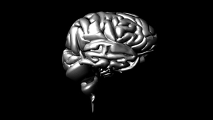 highly detailed animation of a human brain FYI00488287
