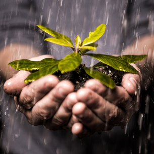 Close up of hands holding seedling in the rain FYI00488415