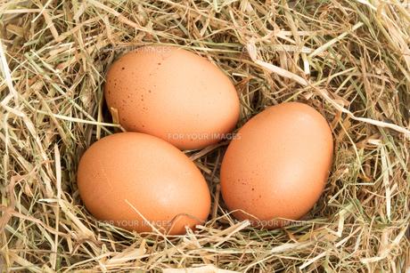 Three eggs FYI00488424