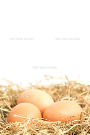 Three eggs nestled in straw nest FYI00488474