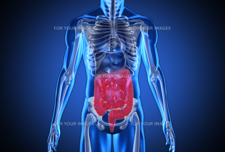 Digital blue human with highlighted digestive system FYI00488549