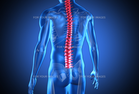 Digital blue human with highlighted red spine FYI00488586
