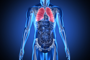 Digital blue human with highlighted lungs FYI00488636