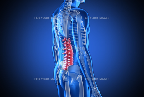 Digital blue human with highlighted spine FYI00488641
