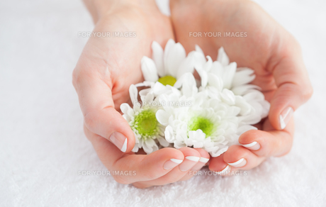 French manicured hands holding flowers FYI00488677