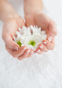 French manicured hands holding flowers FYI00488691