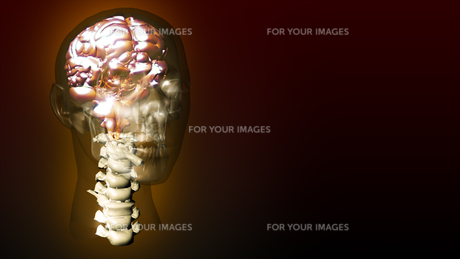 highly detailed animation of a human brain FYI00488807