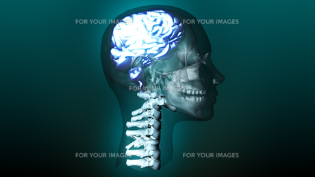 highly detailed animation of a human brain FYI00488846