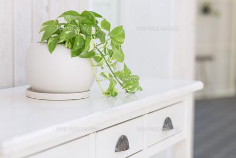 観葉植物 FYI00497297