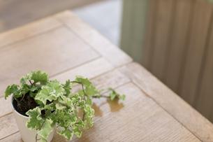 机にある観葉植物 FYI00497325