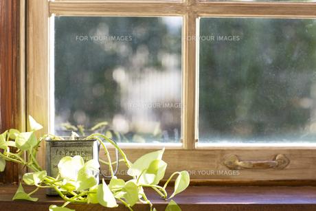 窓際の観葉植物 Fyi00497331 気軽に使える写真イラスト素材