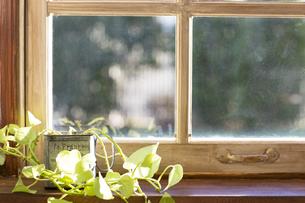 窓際の観葉植物 FYI00497331