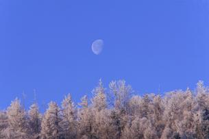 スキー場の朝の様子 FYI00497633
