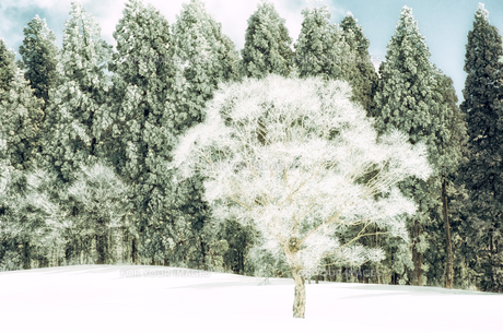 雪山と樹氷 FYI00499025