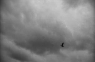 鳥飛ぶ FYI00499111