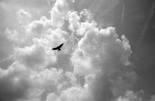飛びたい FYI00499130