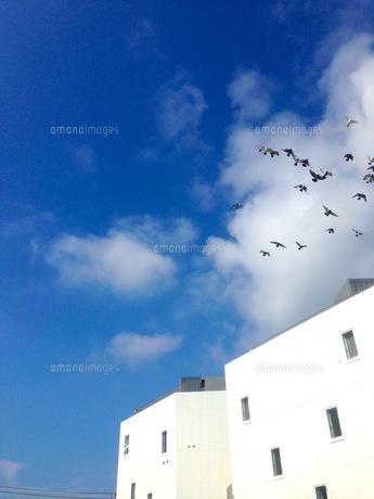 空の写真素材 [FYI00542751]