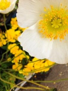 花 FYI00542752