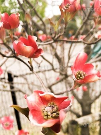花 FYI00542762