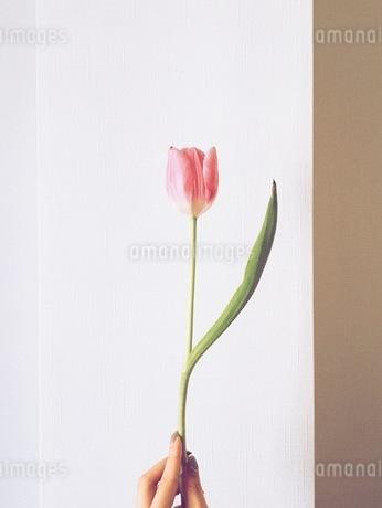 花 FYI00542763