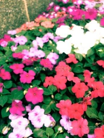 花 FYI00542768
