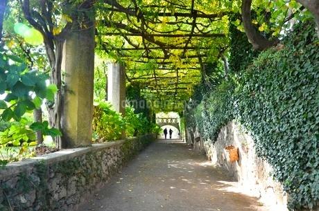 イタリアのラヴェッロの街中風景 FYI00543069