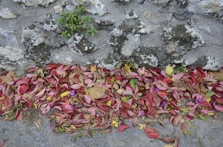 イタリアのラヴェッロの街中風景の写真素材 [FYI00543072]