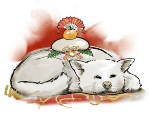 眠る秋田犬 FYI00543481