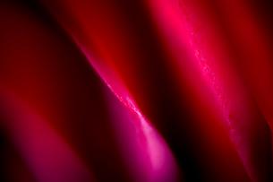 赤い薔薇 FYI00543735