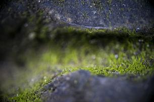 石段と苔 FYI00543739