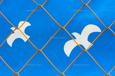 フェンスと鳥 FYI00543746