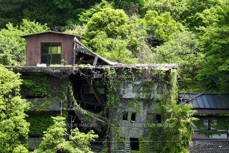 廃墟と緑 FYI00543762