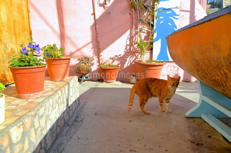 イタリアのプロチーダ島に暮らす猫 FYI00543846