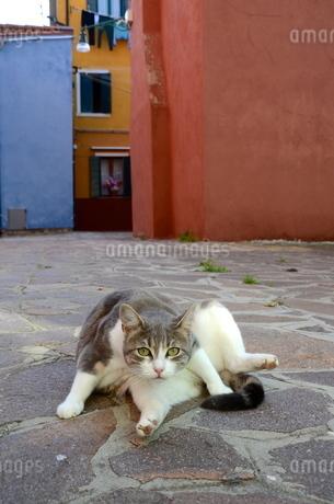 イタリアのブラーノ島で暮らす猫 FYI00543848